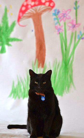 Blackcat One