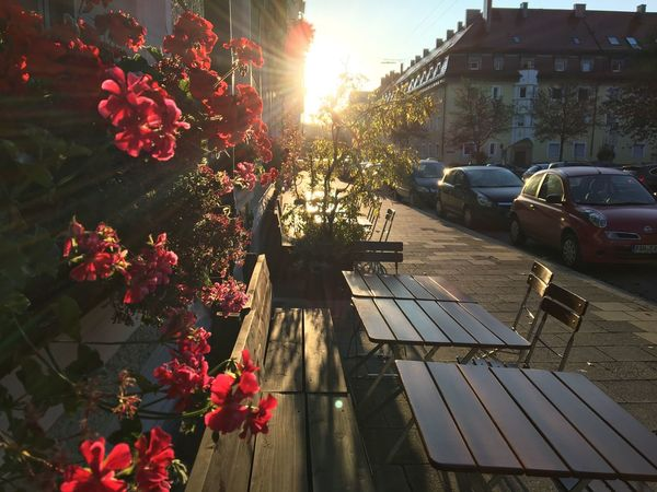 Morgensonne vor dem Myra in München. Habe Semmeln geholt und dabei die Morgensonne hier eingefangen. Munich Plant Architecture Sunlight Nature Built Structure Building Exterior My Best Travel Photo City Sky Flowering Plant