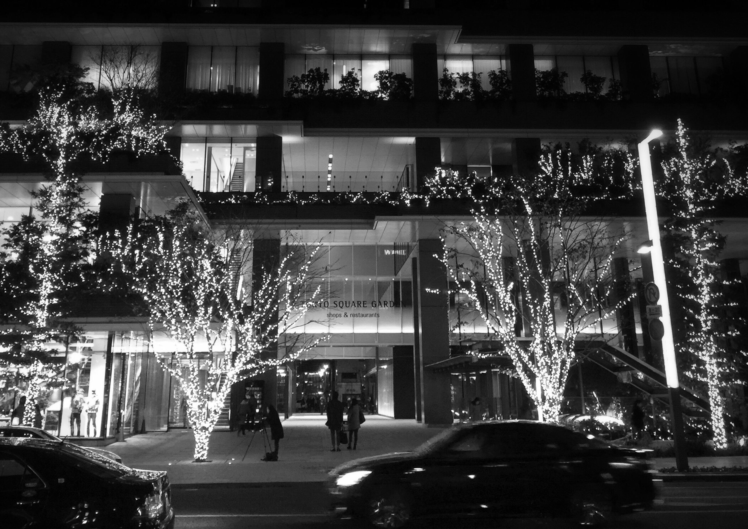 illuminated, architecture, built structure, building exterior, tree, night, lighting equipment, decoration, city, incidental people, potted plant, in a row, window, building, outdoors, house, no people, low angle view, glass - material