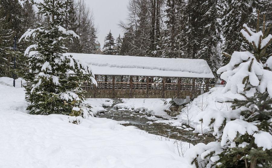 #beautifulbc #beautifulTrresinsn #bridgeovercreek #lightlyfallings #supernaturalBC Cold Temperature Day Nature No People Outdoors Snow Snowing Tree Winter