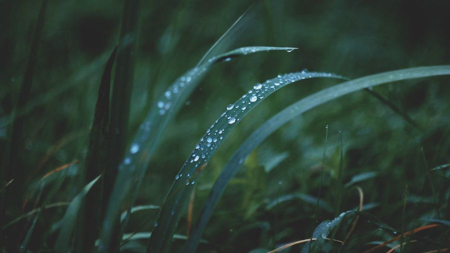 Water Drop Rain Wet Motion Nature Splashing RainDrop Focus On Foreground No People Grass Outdoors Long Exposure Beauty In Nature Spraying Growth Day Purity Freshness Close-up The Week On EyeEm Fujifilm_xseries