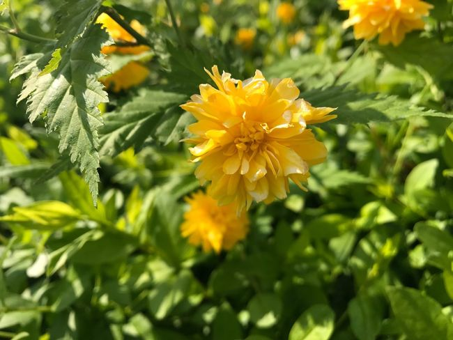 Flower Nature Growth Petal Plant Fragility Beauty In Nature Freshness Yellow Flower Head Leaf No People Blooming Close-up Green Color Outdoors Day