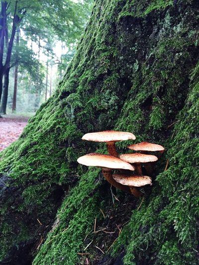 Baarn Baarnsebos Forest Mushroom Nature Tree Trunk Fungus Toadstool Tree Moss Beauty In Nature