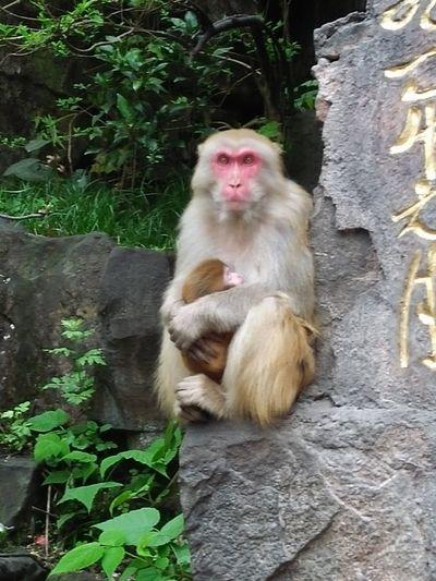 Monkey Mammal
