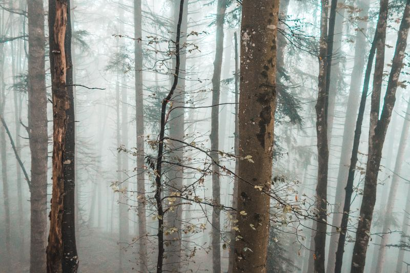 Scenic view of lake in forest during foggy weather