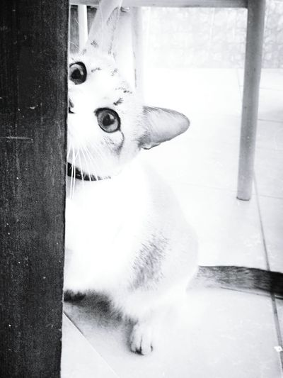 Cat Lovers Blackandwhite Black & White Monochrome Monochromatic Pretoebranco Cat Eyes Animal Photography Cat Lover Gato😽