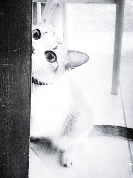 Cat Lovers Blackandwhite Black & White Monochrome Monochromatic Pretoebranco Cat Eyes Animal Photography Cat Lover Gato😽