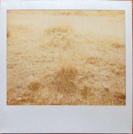 Point Lobos Polaroid Impossible Spectra