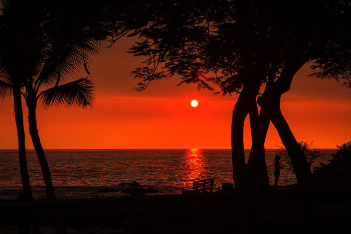 Big Island Hawaii Horizon Over Water Kona Ocean Sea Silhouette Sun Sunset Tree Water