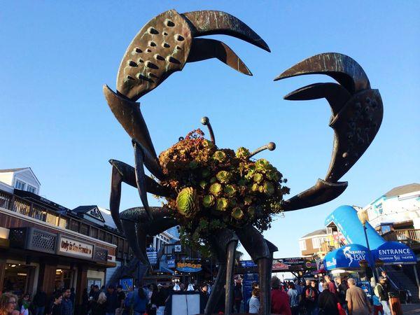 Crab San Francisco Fishermanswharf