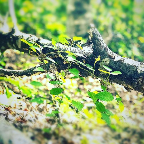 Close-up of tree branch