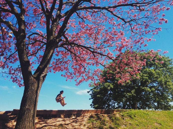 Man skateboarding under tree