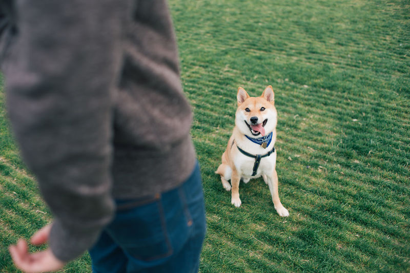 Midsection of man standing with dog on grassy field