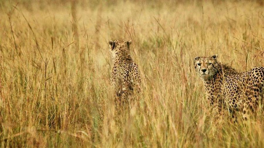 Animals on field