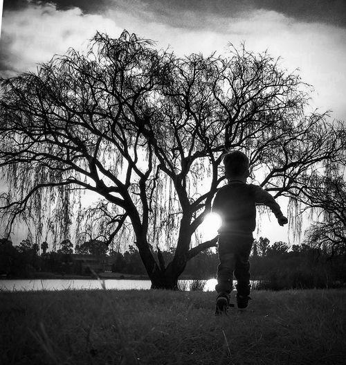 Running to the lake Sunset Lake Field Running Boy Sunrise Tree Play Time Boy Running Monochrome Blackandwhite B&w Family Tree Child Childhood Full Length Silhouette Sky Park - Man Made Space