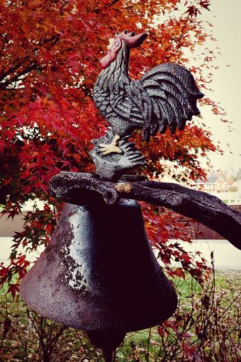 Rooster Bell Outdoors Beautiful Narure_collection Tarnished Rusted Metal  Fall Beauty Farm Contrast Hidden Elements Cock A Doodle Doo