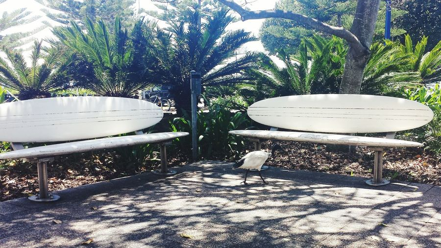 Beachlovers EyeEm Gallery Surfing Surfseat Birds_collection Randomness Taking Photos Peaceful Place Hanging Out Peace And Quiet