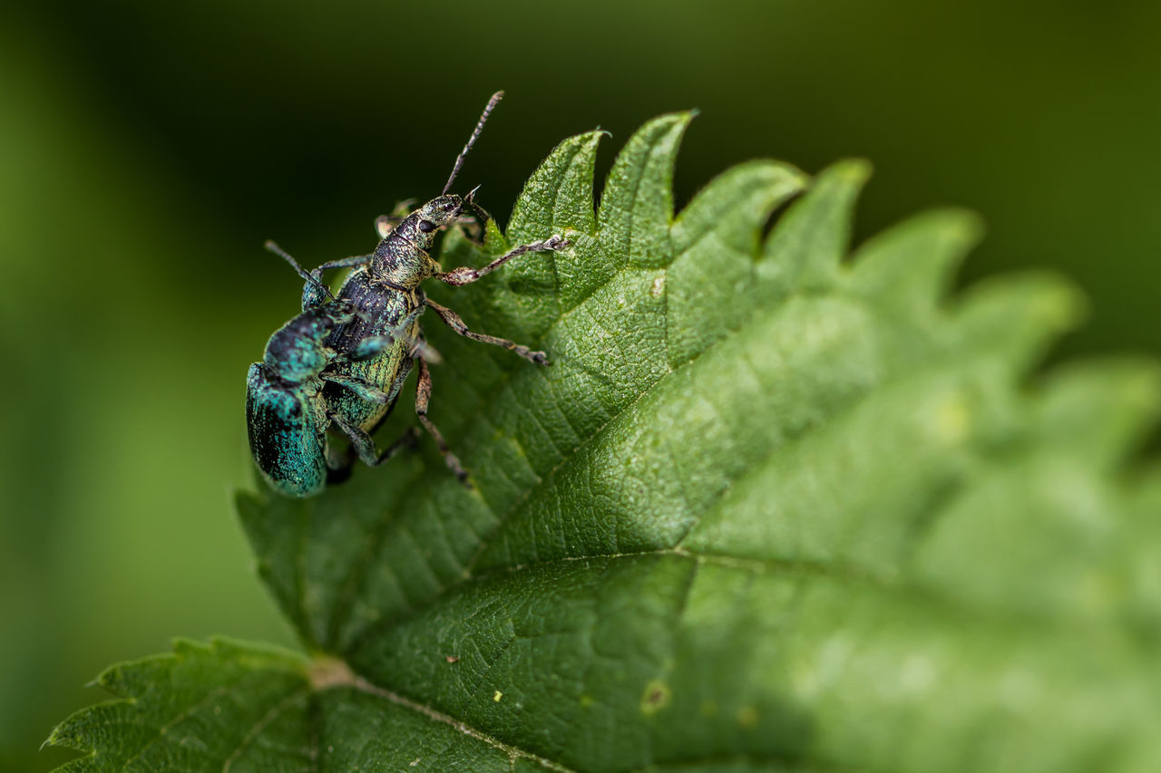 green color, leaf, plant part, invertebrate, animal wildlife, insect, one animal, animals in the wild, animal themes, animal, close-up, plant, selective focus, day, nature, no people, growth, animal body part, arthropod, outdoors, animal eye