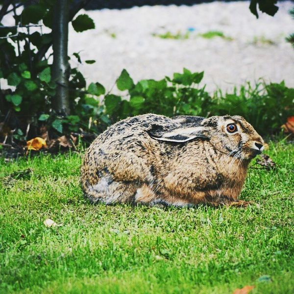 Rabbit Nature Neighbor Finland