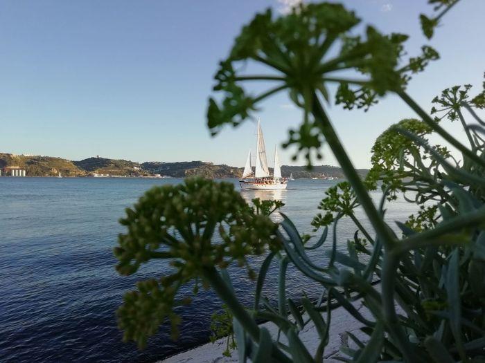 White sails Rio