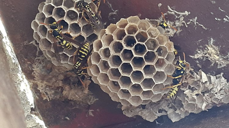 hornet's Nest by samsung S5 Taking Photos Hornet's Nest