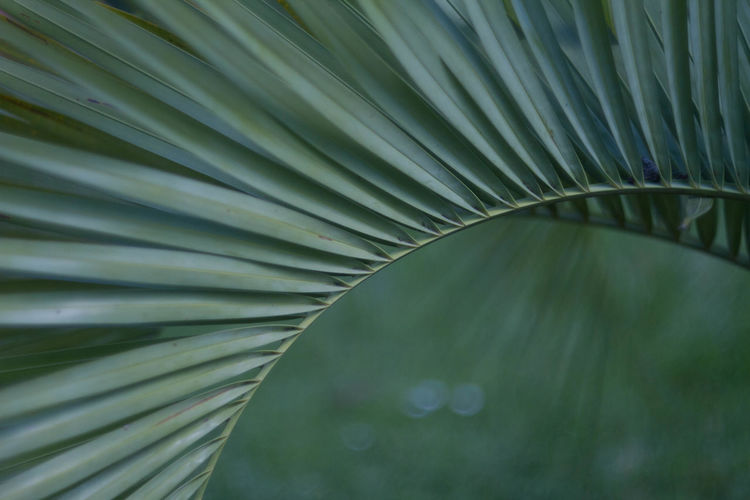 Colors Symmetry Palm Palm Tree Minimal Green Detail Plant Nature Beauty In Nature Beauty Backgrounds Leaf Close-up The Great Outdoors - 2018 EyeEm Awards The Creative - 2018 EyeEm Awards