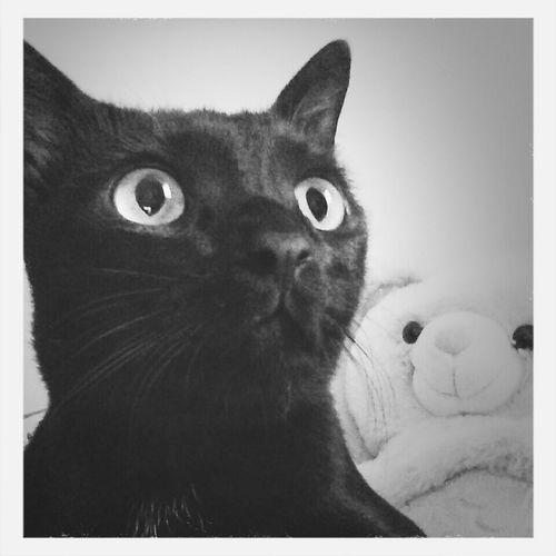 Bhutu and Teddy. Friday pose. EyeEm version. Cat Teddybear Holiday