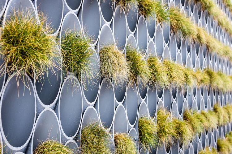 Close-up of grass growing on pipes