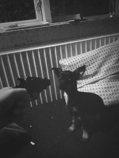 Hundeprop