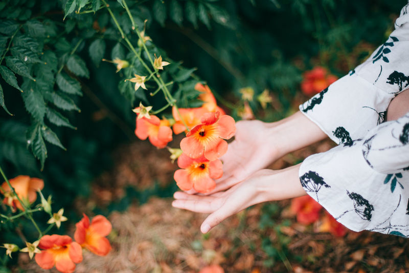 Hand holding flowering plant