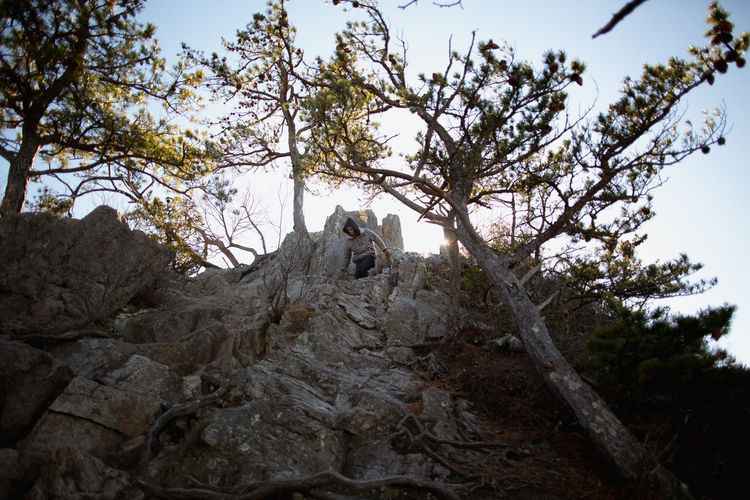 Low angle view of trees by rocks in forest against sky
