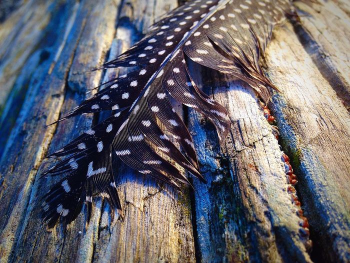Feather on Driftwood Close-up Feather  Driftwood Beach IPS2016Closeup Beachphotography Ladyphotographerofthemonth Feathers Beach Photography Nature