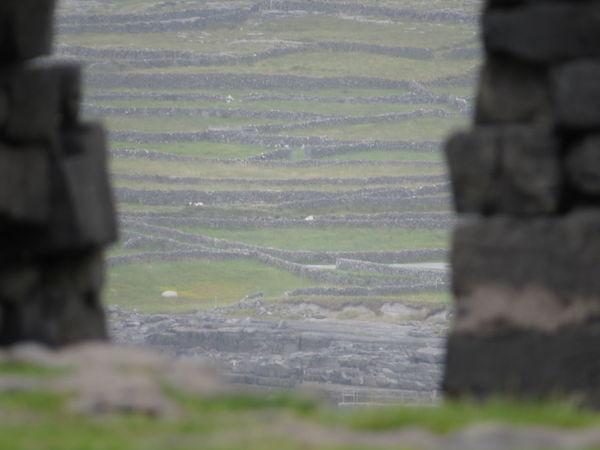 Fort Dún Aonghasa, Árainn Insel, Galwaybucht, Galway Bay, County Galway, Irland, Ireland County Galway Dún Aonghasa Galway Bay Ireland Beauty In Nature Day Field Focus On Background Grass Landscape Nature No People Outdoors Árainn Isle