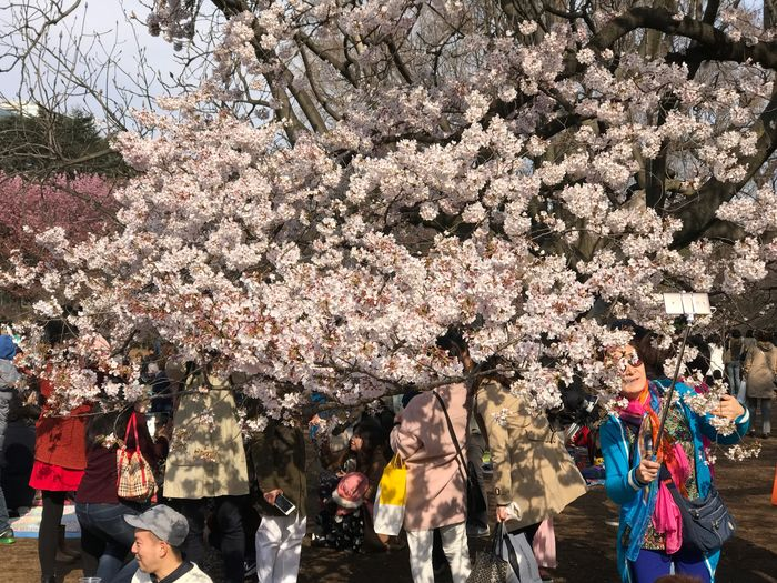 Cherry Blossom Tree Blossom Flower Springtime Cherry Tree Real People Fragility Branch Freshness Day Outdoors Pink Color Large Group Of People Beauty In Nature Men Nature Growth Adult People Tokyo Japan Shinjuku