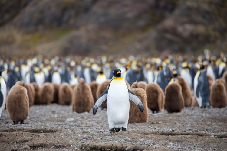 Penguins Perching On Land