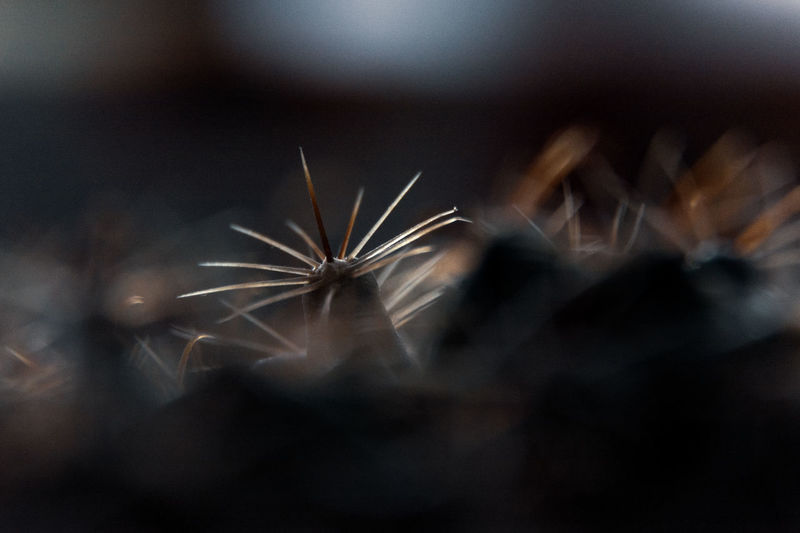 Cactus Beauty In Nature Close-up Flower Flowering Plant Focus On Foreground Fragility Freshness Growth Motion Nature No People Plant Selective Focus