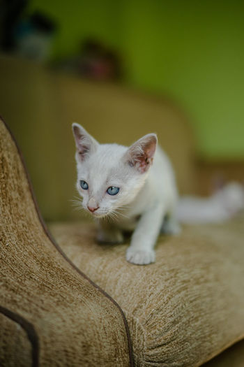 Cat Domestic Domestic Animals Domestic Cat Feline Focus On Foreground Indoors  Kitten Looking Looking At Camera Mammal No People One Animal Pets Portrait Selective Focus Vertebrate Whisker