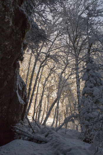 Snow ❄ Bare Tree Beauty In Nature Branch Cold Temperature Day Forrest Nature No People Outdoors Scenics Sky Snow Snow Covered Tranquil Scene Tranquility Tree Tree_collection  Winter Winter Forest Winter Wonderland