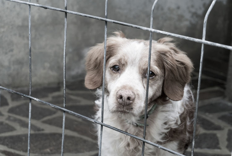 Sad dog in his prison Alone Animal Themes Cage Caged Canine Diagonal Lines Dog Domestic Animals Jail Lonliness Looking At Camera Mistreated Mistreated Dog No People One Animal Outdoors Pets Portrait Prison Prisoner Sadness