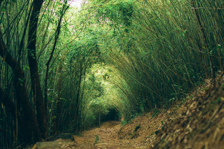 Scenic view of bamboo trees in forest