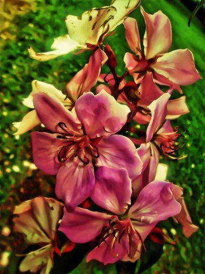 Pink Flower Porn Eye4photography  EyeEm Nature Lover