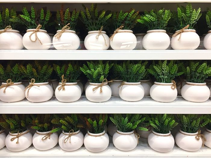 Artificial Plants In Shelves