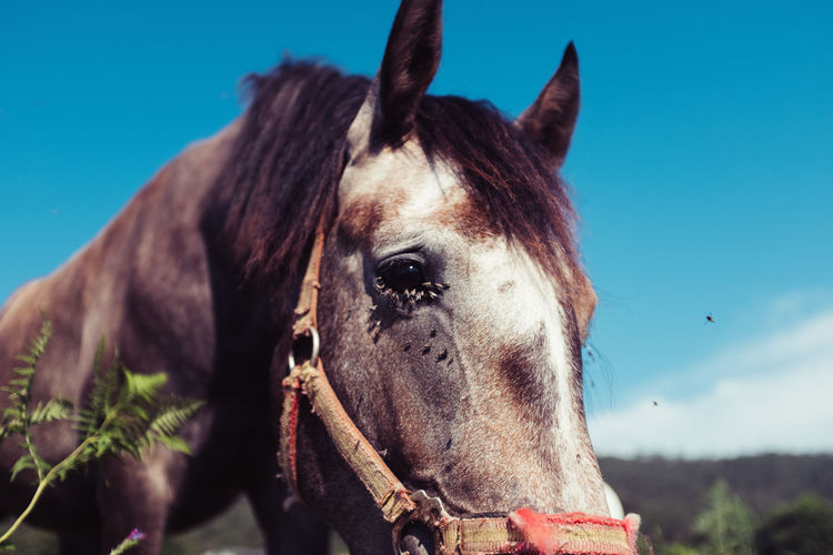 Close-up of horse against blue sky