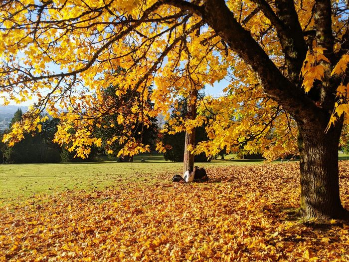 Trees and yellow leaves in park during autumn