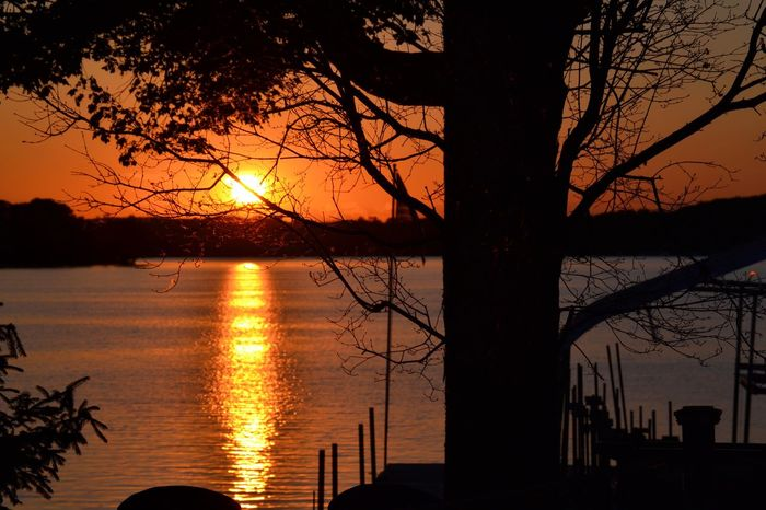 Sunset over the bay Tree Nature Beauty In Nature Tranquil Scene First Eyeem Photo