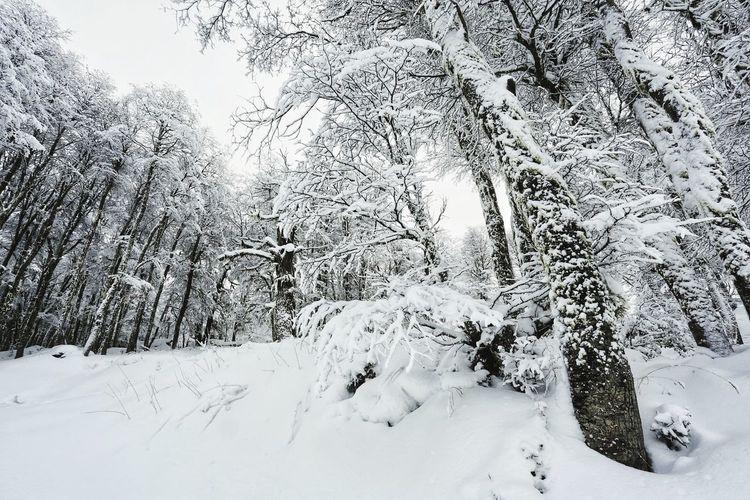 frozen Tree Snow Cold Temperature Mountain Snowing Winter Polar Climate Forest Branch Frozen Deep Snow WoodLand Powder Snow Tree Trunk Snowboarding