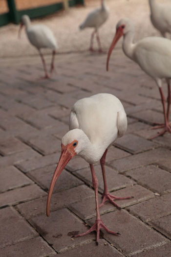 Close-up of ibis perching outdoors