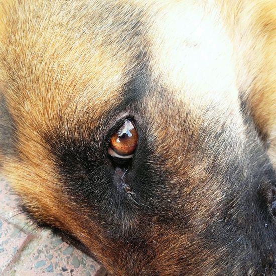 Eye Eyedog Eye4photography  Dog Dogstagram Dog Love Dogs Of EyeEm Photo Photography Photooftheday Photographer Photographic Memory Animals Animal Animal Photography Animal Love