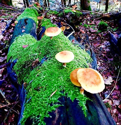 EyeEmNewHere Wald Natur Löwensteiner Berge Schwäbischer Wald Weekend Mountainbike Sport