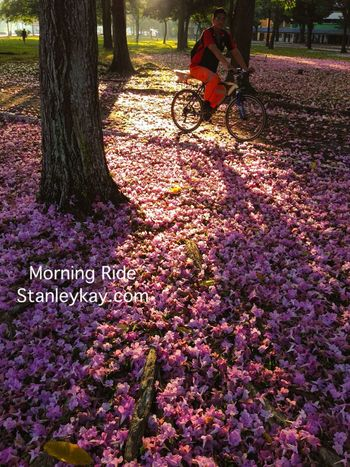 Morning Ride on Good Friday The Nature Of Beauty Relaxing Landscape_Collection Light And Shadow Nature Traveling EyeEm Nature Lover Flowers Morning Light Colors